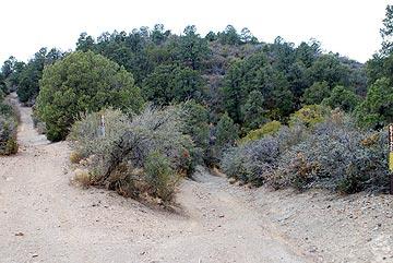 Bradshaw Mountain Roads