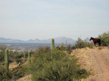 Jake on Wickenburg Mountain