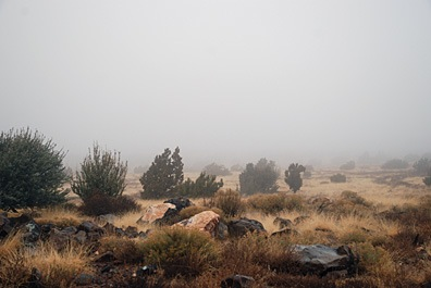 View with Fog