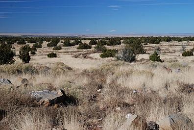 Howard Mesa View