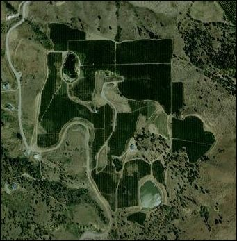 Satellite View of Orchard