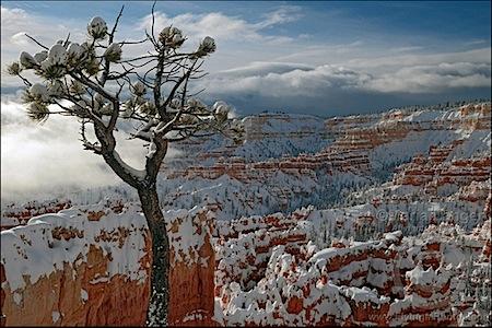 Bryce Canyon Lone Pine