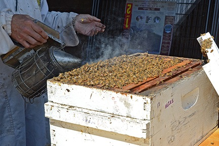 Smoking the Bees