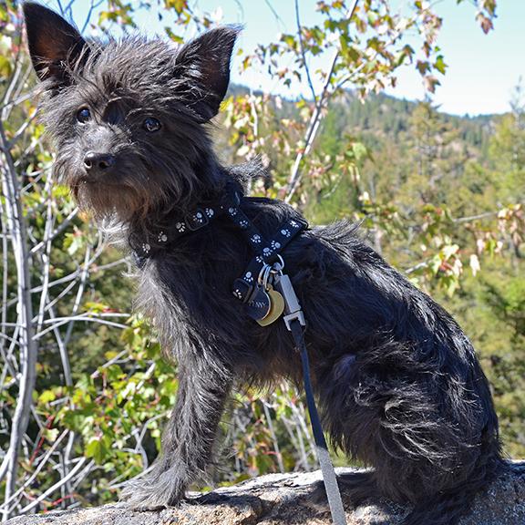 Penny on a Hike