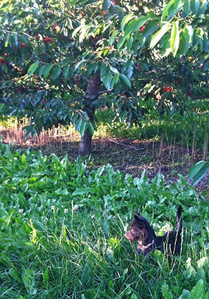 Penny in the Orchard