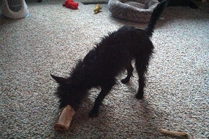 Penny and her Peanut Butter Bone