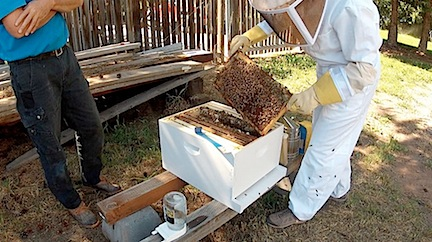 Hive Inspection Photo