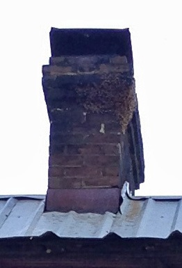 Bees on a Chimney