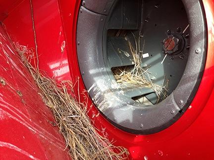 Nest in the Fan Scroll