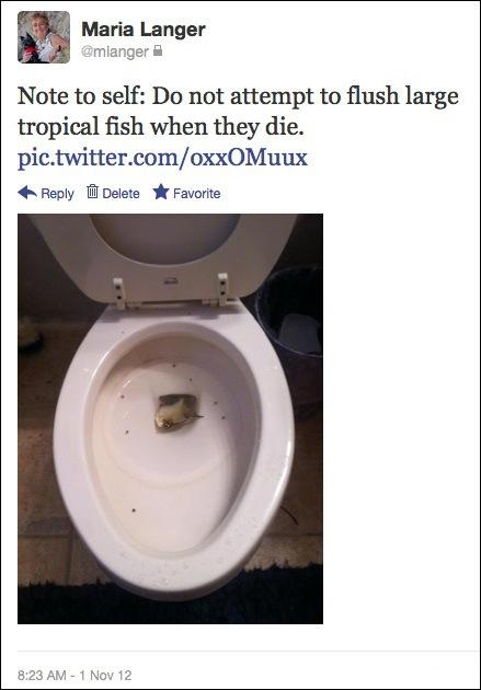 Flushing Fish