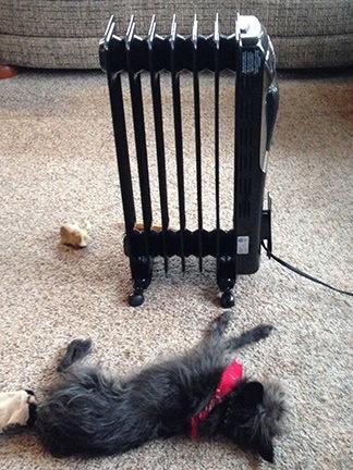 Radiator Dog