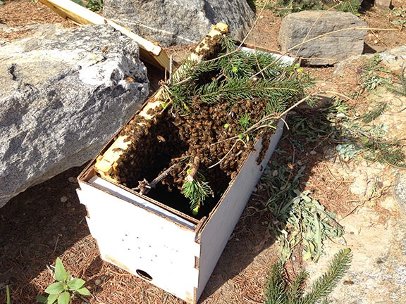 Bees on a branch in a box