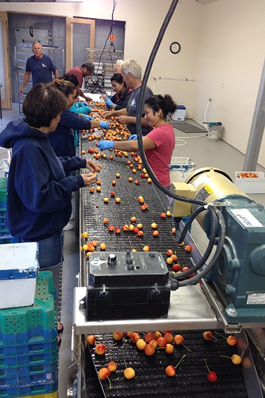 The Cherry Packing Line