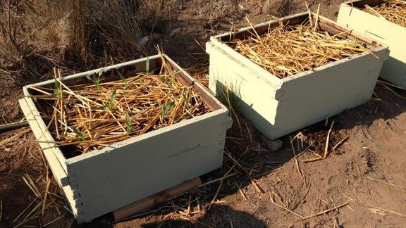 Beehive Planters