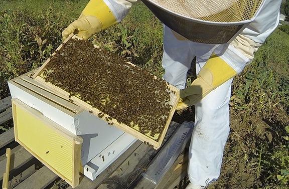 Maria the Beekeeper