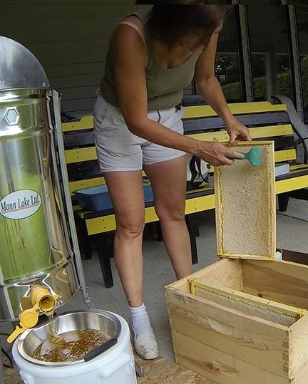 Extracting Honey