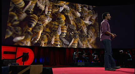 TED on Bees