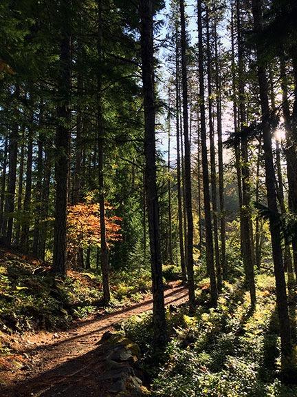 Morning Sun Through Autumn Trees