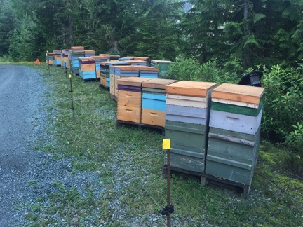 Bee Yard Near Mount Baker