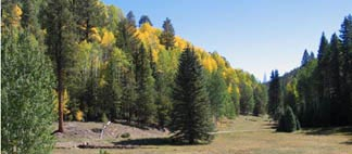 The Kaibab Plateau in Autumn