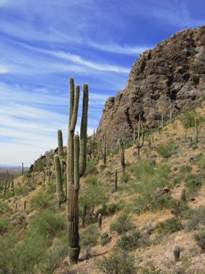My Desert