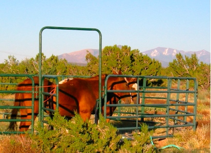 Horses at Howard Mesa