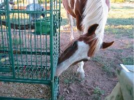 Cherokee at Cage