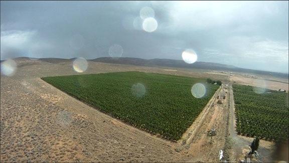 Orchard and Rain