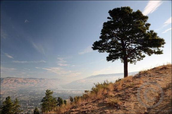 Lone Pine Over Wenatchee