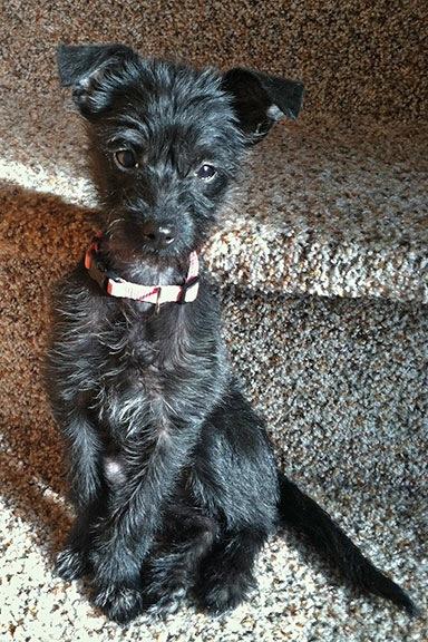 Penny the Tiny Dog