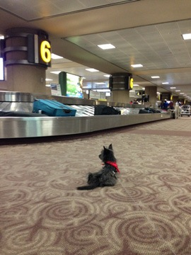 Baggage Claim with Penny