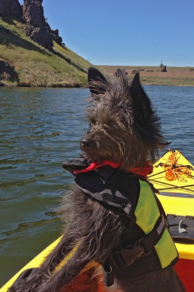 Penny the Kayaking Dog