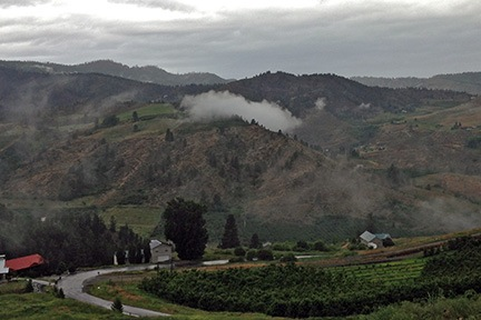 Orchard in the Clouds