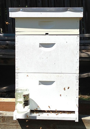 Hive #1 in Mid July 2013