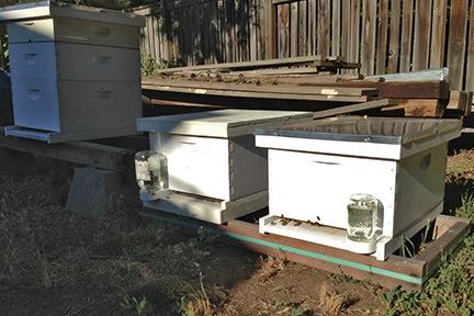 My Three Hives