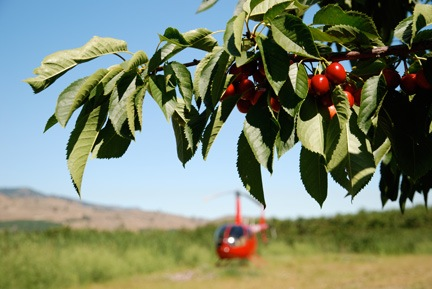 Cherry Drying Parking