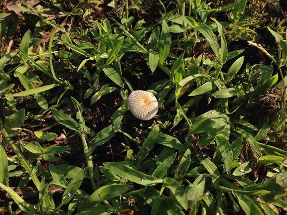 Flower or Mushroom?