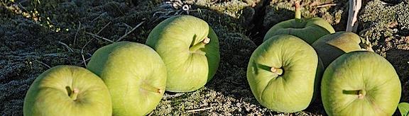Orchard Still Life
