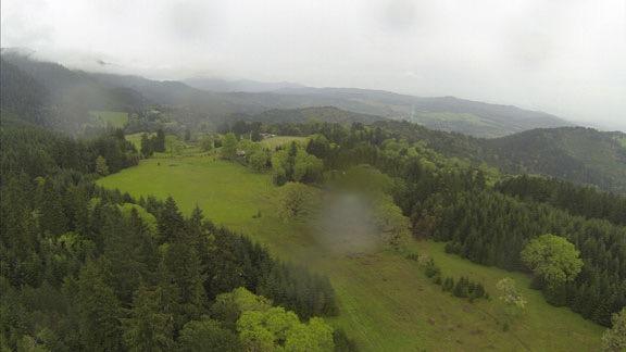 Green Hills Near Umpqua