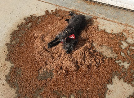 Dog in Composite Sawdust