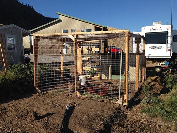 Chicken Yard 2