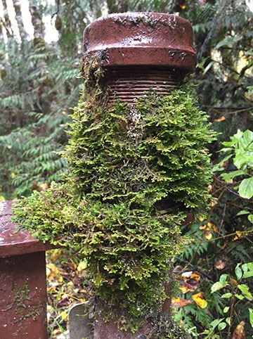 Moss on a Metal Post