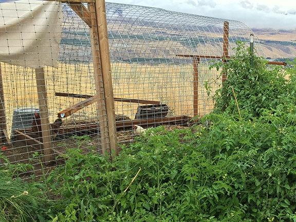 Chicken Yard Extension