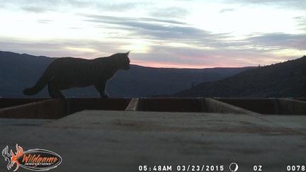 Dawn Cat