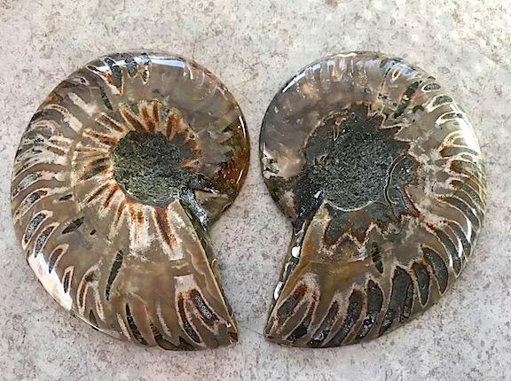 Ammonite-Outside