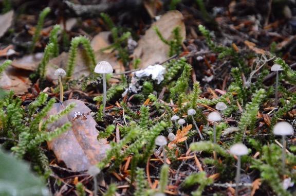More Tiny Mushrooms
